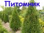 Егорьевский Питомник Никитенко Александра